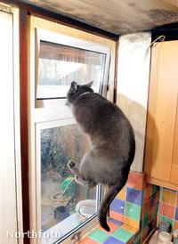 Ez egy másik macska, de neki sem lehet jobb