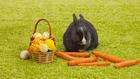 Félreértésből lett a nyúl a húsvét szimbóluma