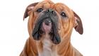 Egy kutya már 7 éves kortól nyugdíjasnak számít