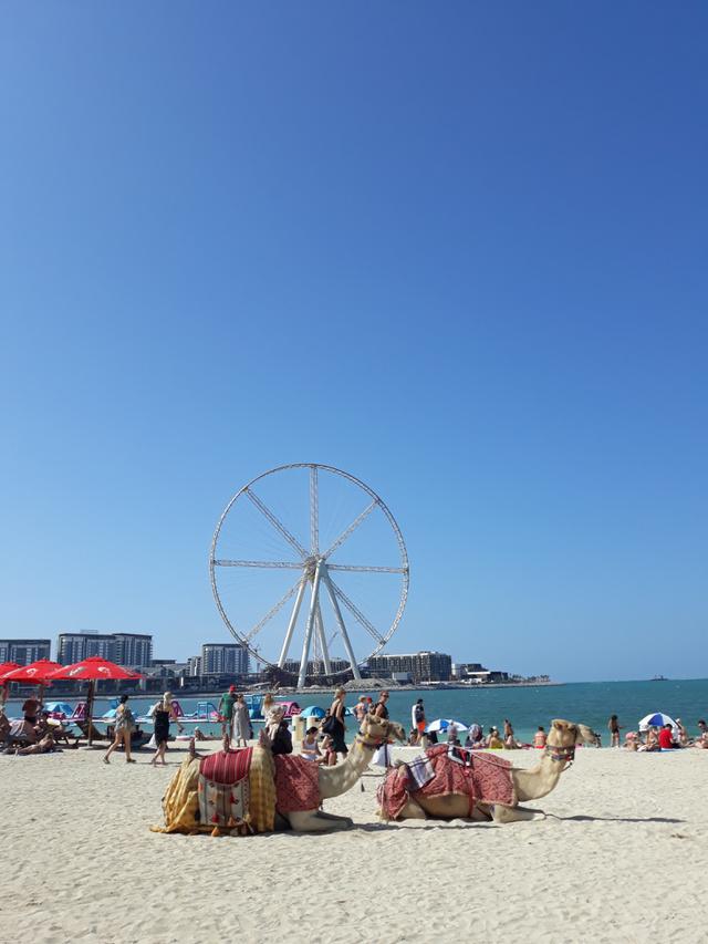 A Meraas-beach-en heverő tevék mára már csak turistalátványosságok.