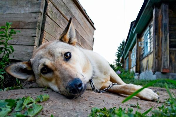 stockfresh id445976 dog sizeS