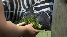 Sérült gyerekek az Állatkertben