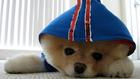 A játékmackóvá fodrászolt kutya könyve bestseller lehet