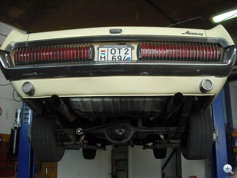 cougar 028