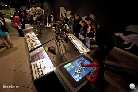 Csontváz-rekonstrukció, kiskorú felhaszánlóknak