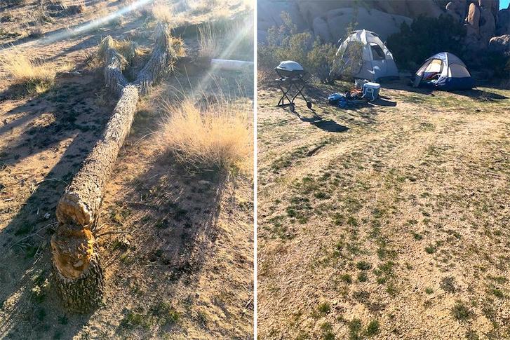 Kivágott fa, illegális tábor a Joshua Tree Nemzeti Parkban