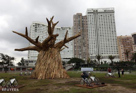Baobabfa mása a konferencia helyszínén.