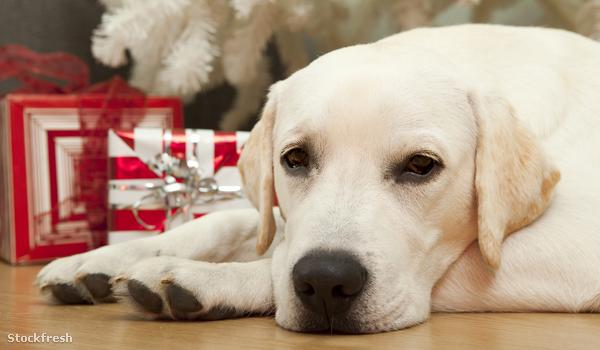stockfresh 764910 christmas-dog sizeM