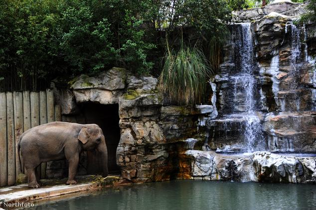 Elefánt a kaliforniai Fresno Chaffey állatkertben, Fresno városában