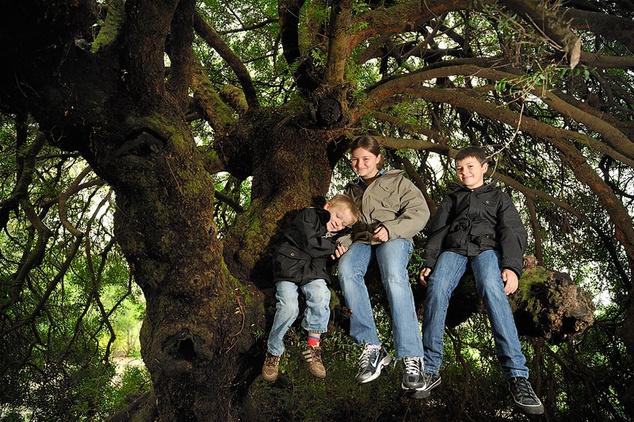 Pisztáciafa, Franciaország