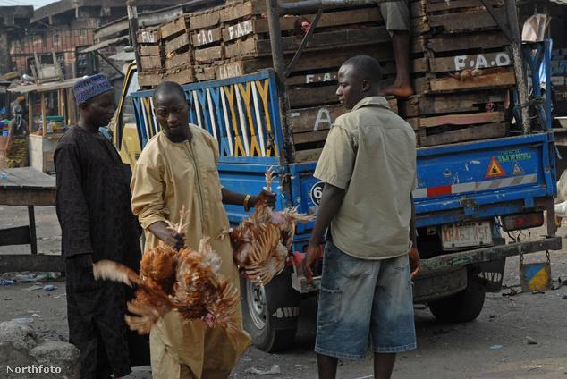 Csirkék szállítása