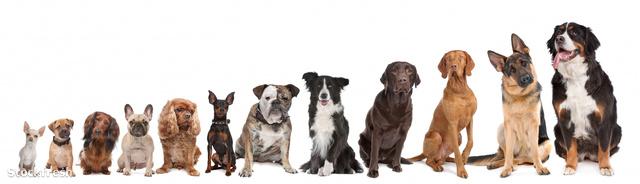 stockfresh 1114603 twelve-dogs-in-a-row sizeM