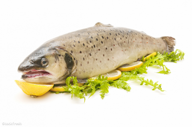 stockfresh 1229000 wild-trout sizeM