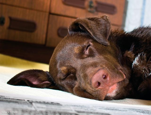 Az állatok jól alszanak ugyan, de horkolni ők is szoktak