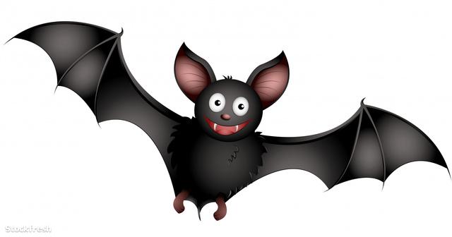 stockfresh 1004727 bat sizeM