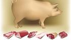 Karaj, tarja, dagadó - sertésügyi alapok