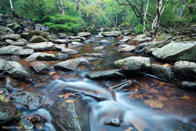 stockfresh 1131019 water-spring-in-jungle sizeM