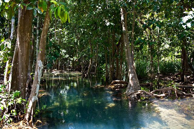 """Pa Phru Tha Pom Khlong Song Nam, ThaiföldA thaiföldi erdő neve magyarul azt jelenti, """"kétvizű csatorna"""". Ez a csodálatos hely szövevényes gyökérzetű mangrove fáiról és a közöttük kanyargó, élénk kék vízről ismert, ami a színét árapálykor az édes és a sós víz keveredésének köszönheti."""