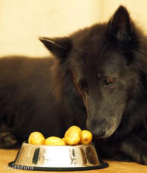bm joeydog fgh01836 07
