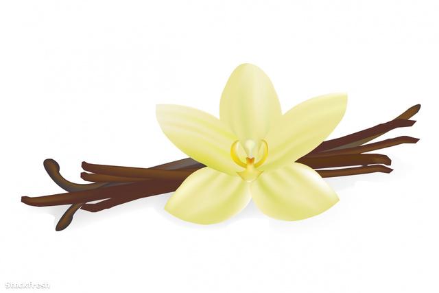 stockfresh 1492790 vanilla-pods-and-flower sizeM