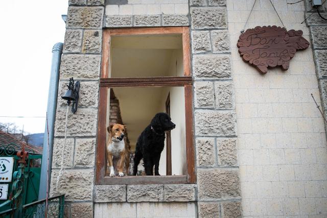 A Bari Tanya bejáratánál a tanya kutyusai fogadják az ide érkezőket. Később is az a benyomásunk, hogy mindenhol ott vannak.