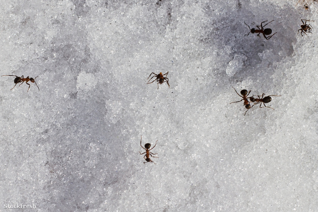 stockfresh 994115 ants-on-snow sizeM
