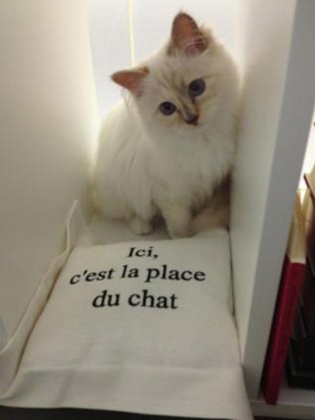 Choupette, azaz cuki a fehér Chanel cica