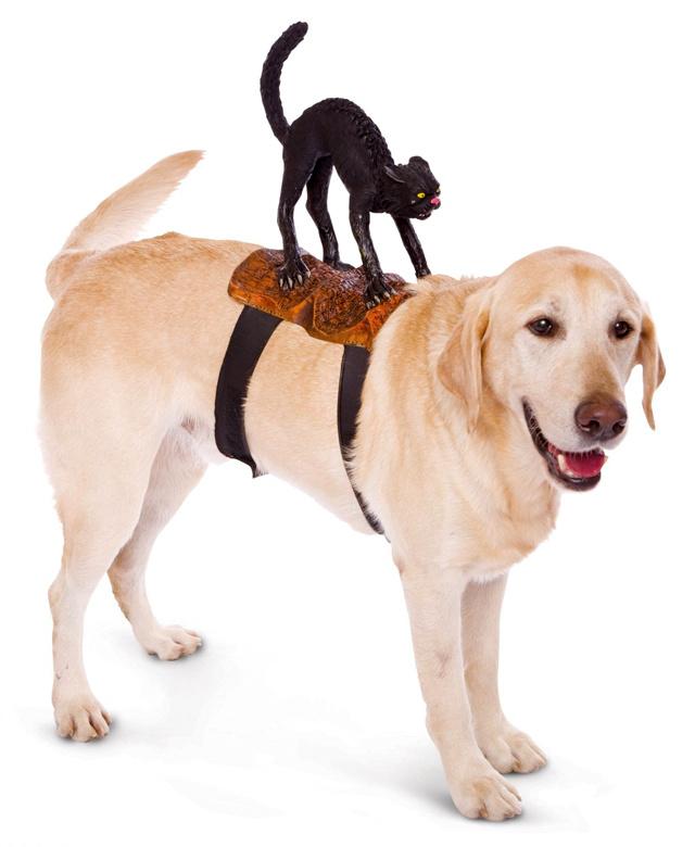 Mi sem természetesebb, mint egy fekete macska a kutya hátán.