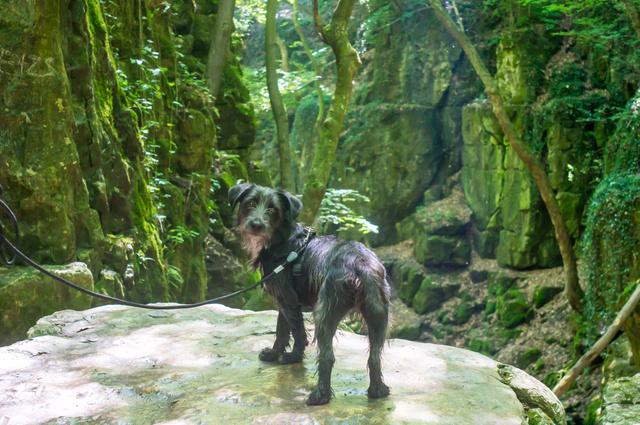 Kiwi hobbittá lényegült, és felfedezi a Római-fürdőt.