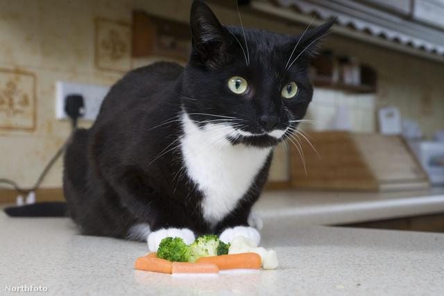 tk3s masons veggie cat 130007613