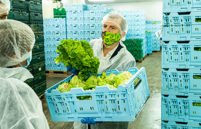 Zoltán lelkesen mesélt nekünk a különböző salátatípusokról. A fodros levelű saláták például nagyon népszerűek a hidegkonyhai készítményekben.