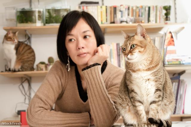 Nem, nem kell megszabadulni a bevált macskáktól