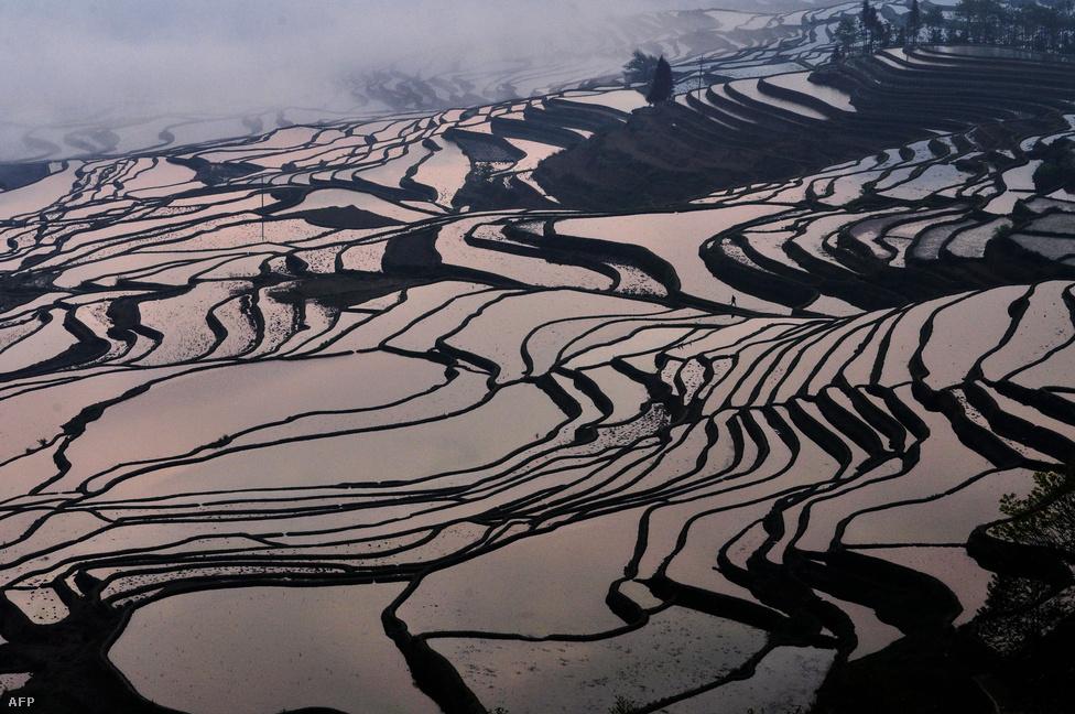 Teraszos földművelés Kína Junna tartományában. Idén 6.4 millió hektár erdő tűnt el a Földön, a gyorsuló tendencia egyik fő oka a kínai mezőgazdság aggresszív terjeszkedése. (Március 11.)