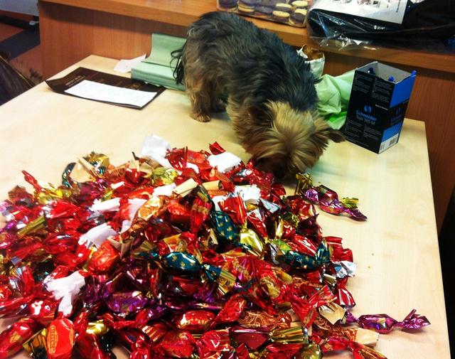 A teszt után kolleganőnk kutyája is ellenőrizte a felhozatalt