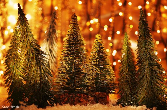 stockfresh 1431177 christmas-tree-forest sizeM