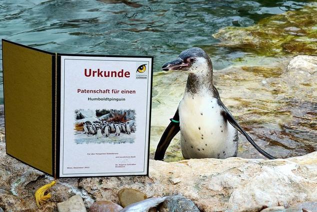 A pingvin a sláger