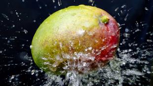 Furagyümölcs-kalauz: mangó
