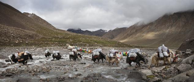 Kailash-hegy az állatok vonulásával