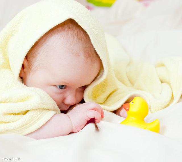 Egy jó takarót lehet rágcsálni, kukucsolni vele, segít, ha hideg van, befedi a bunkert, és öltöztet is
