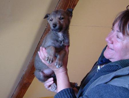 Kép: csizmaskandur.com