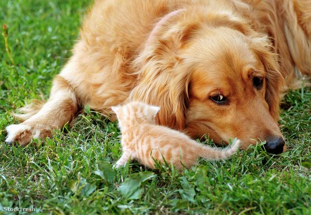 stockfresh 2102462 dog-and-kitten sizeM