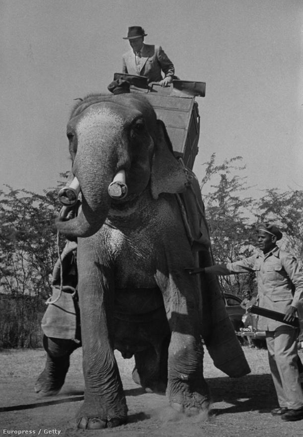 Tito elefánton nyargal 1955-ben. Az elnök 1970-ben Indira Gandhitól kapott egy kétéves elefántot, Sonyt, aki 2010-ben pusztult el.