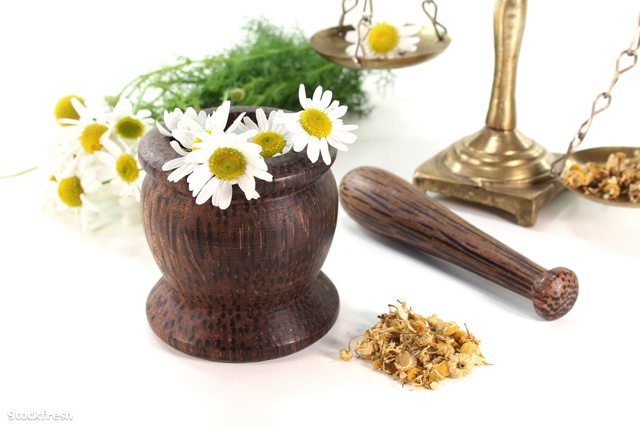 stockfresh 1078485 chamomile-flowers-with-mortar-and-scales size