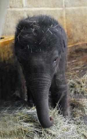 elefantborju03 foto Bagosi Zoltan
