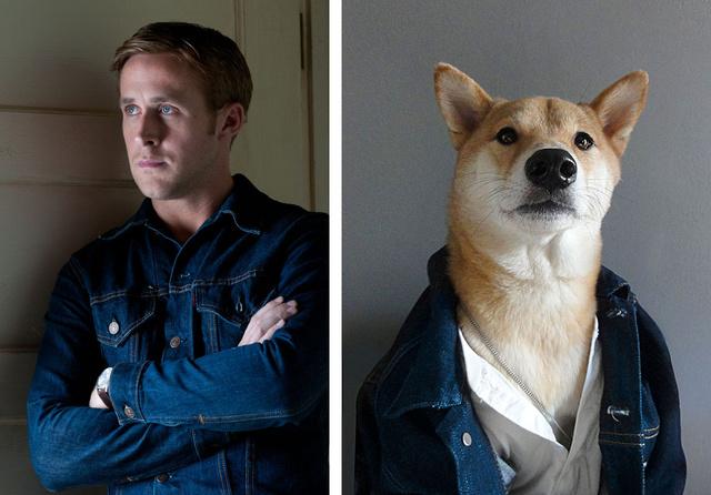 Nők milliói rajonganak Ryanért, vajon a kutyahölgyek is hasonlóan éreznek Menswear Dog iránt?