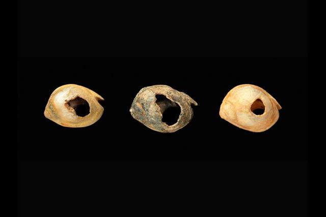 Nassarius gibbosulus shell beads