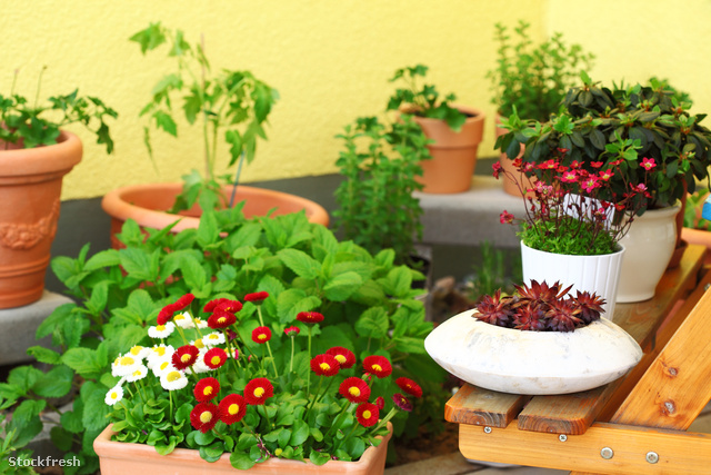 stockfresh 140731 terrace-or-roof-gardening sizeM