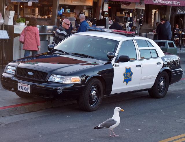 Sose nézd madárnak az amerikai rendőrt