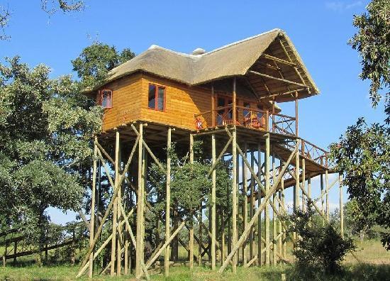 pezulu-tree-house-mountain