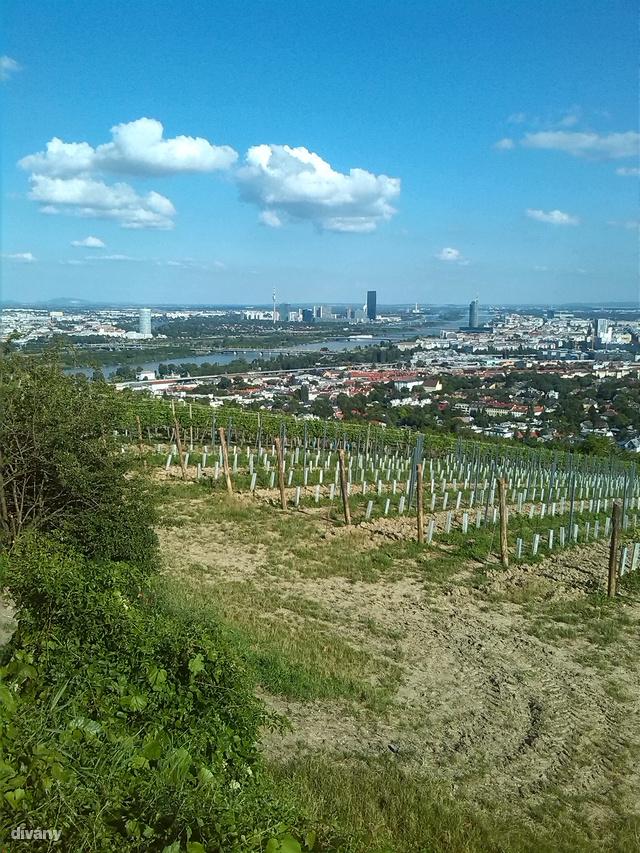 Ezt látja egy osztrák bortermelő